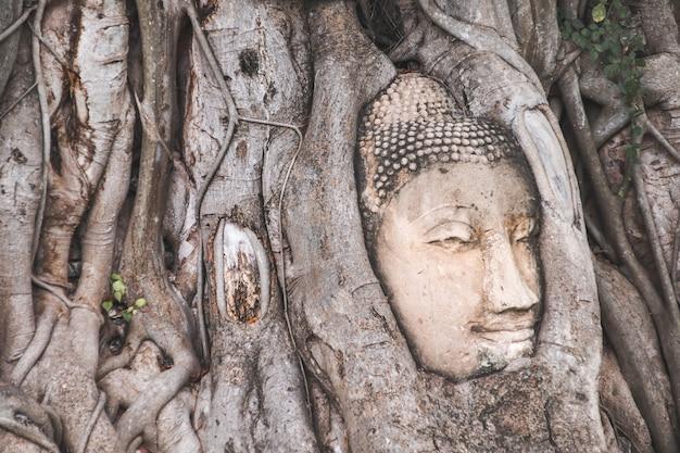 Estátua da cabeça de buda presa nas raízes da árvore bodhi