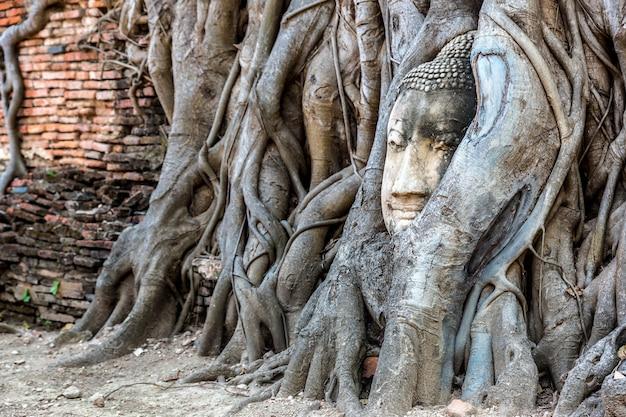 Estátua de ayutthaya head of buddha em raízes de árvores, templo de wat mahathat, tailândia