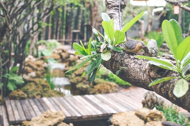Estátua dos pássaros dos pares em um borrão do café do jardim do fundo da árvore.
