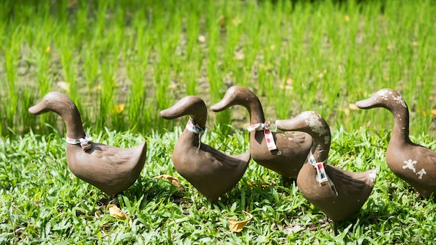 Estátuas de pato falso perto de fazenda de arroz