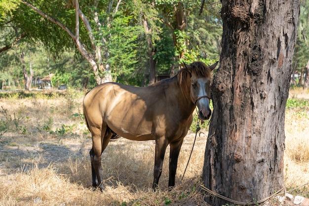 Estável cavalo marrom sob a árvore