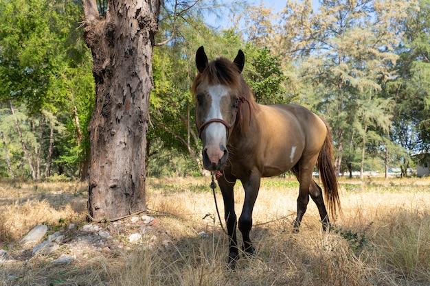 Estável de cavalo marrom na grama seca