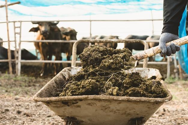 Esterco ou esterco animal no gado e nas fazendas centrais.