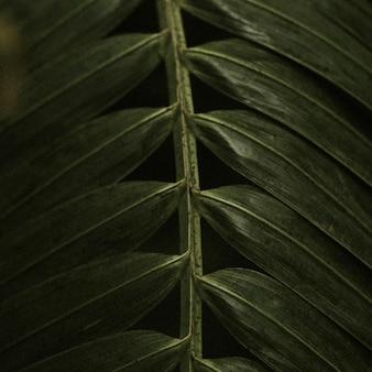 Estética da selva de fundo de folha escura para postagem no instagram