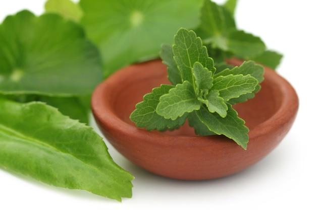 Estévia com outras ervas medicinais de perto