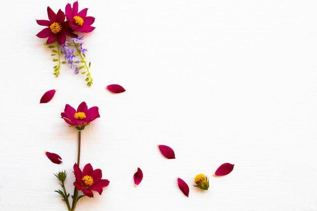 Estilo de cartão postal arranjo cosmos de flores vermelhas