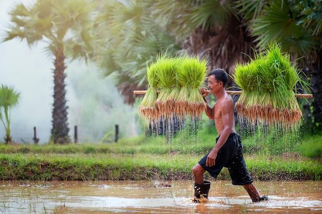Estilo de vida do povo do sudeste asiático no campo rural tailândia