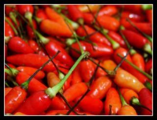 Estilo filipino pimenta