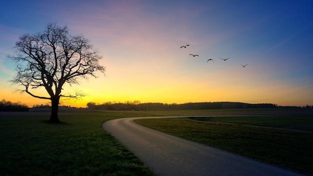 Estrada ao lado da árvore durante a hora dourada