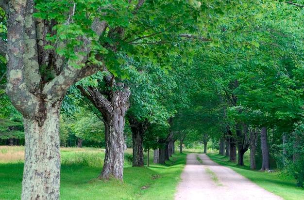 Estrada arborizada