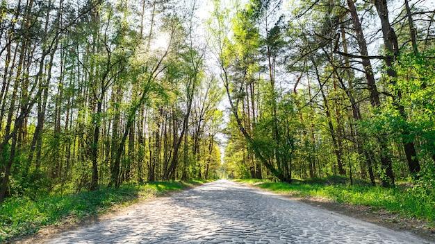 Estrada asfaltada pela floresta