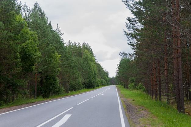 Estrada asfaltada vazia através da floresta verde, árvores, pinhos. verão