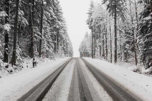Estrada através da floresta de inverno