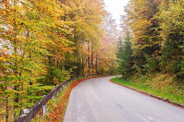 Estrada através da floresta de outono de fada, faias brilhantes, paisagem
