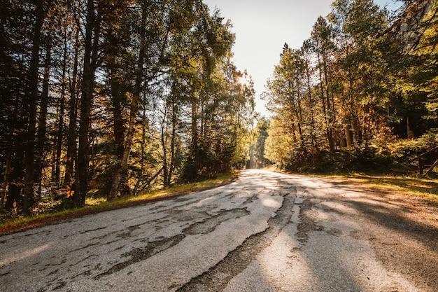Estrada através da floresta no outono