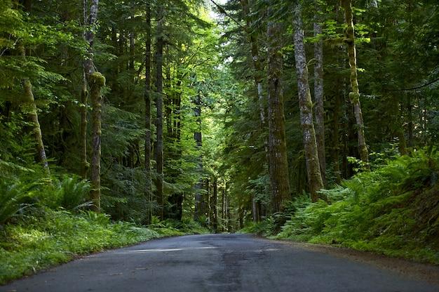 Estrada através da floresta profunda