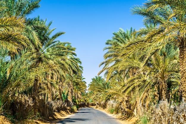 Estrada através de um oásis em tamacine - argélia, norte da áfrica