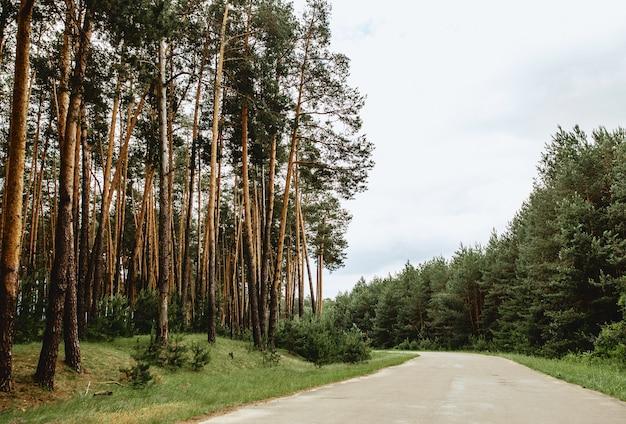 Estrada, através, floresta pinho, apesar, verde, primavera, meadows