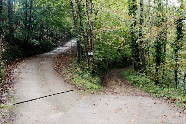Estrada bifurcada com folhas caídas na floresta