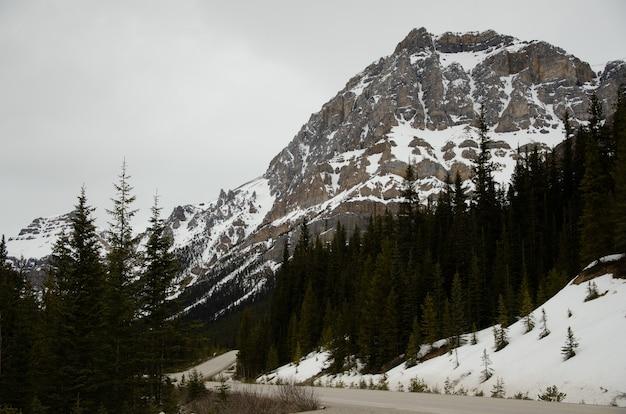 Estrada cercada por árvores e montanhas cobertas de neve