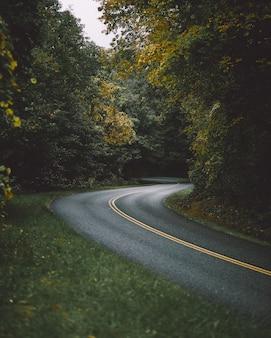 Estrada cercada por belas árvores altas
