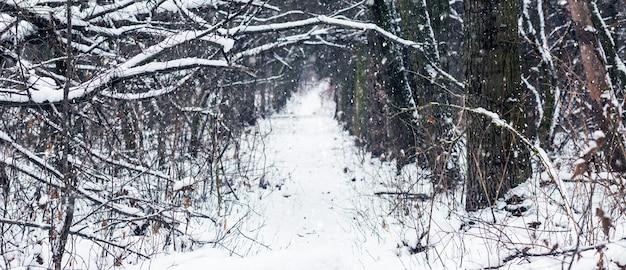 Estrada coberta de neve em matagais de floresta no inverno durante queda de neve