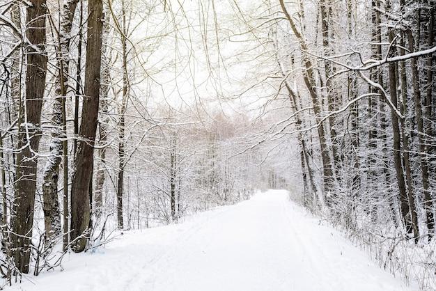 Estrada coberta de neve em um parque entre árvores desfolhadas e paisagem de inverno