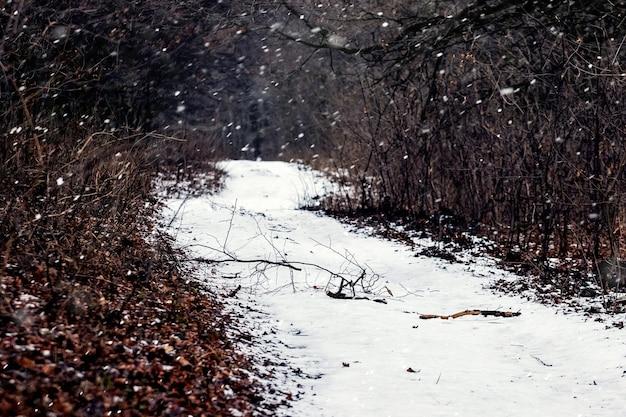 Estrada coberta de neve em uma floresta escura durante uma nevasca