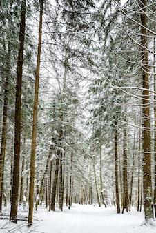 Estrada coberta de neve entre abetos e bétulas na floresta de inverno