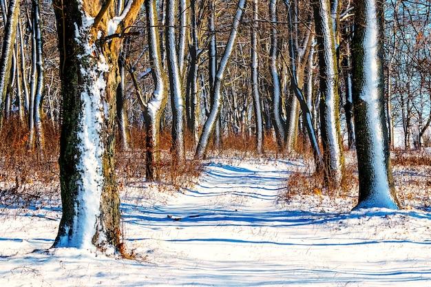 Estrada coberta de neve na floresta com tempo ensolarado