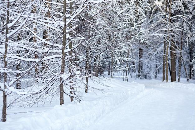 Estrada coberta de neve na floresta de coníferas de inverno