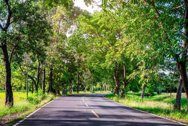 Estrada, com, árvore, natureza, em, luz solar