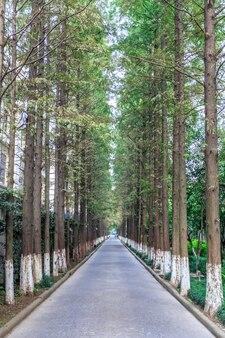 Estrada com árvores