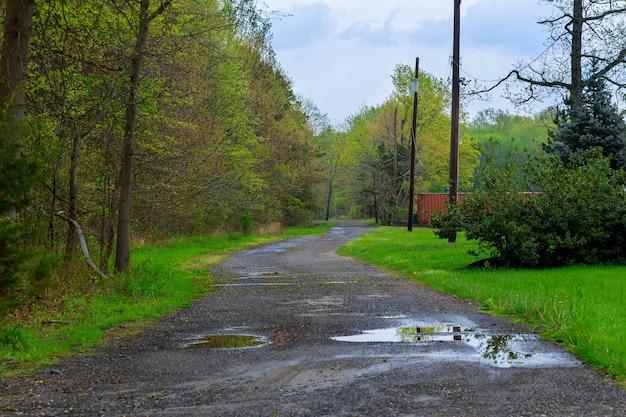Estrada com folhas na floresta. muitas árvores verdes ao ar livre.