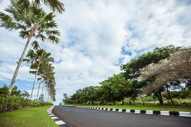 Estrada com palmeiras