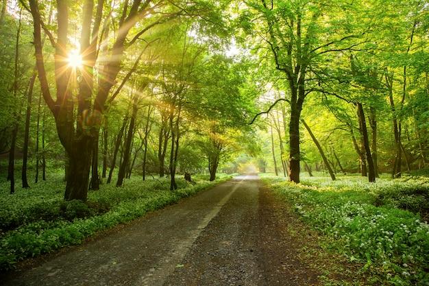 Estrada da floresta com o sol da manhã a espreitar através dos ramos.
