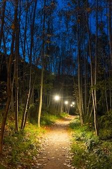 Estrada da floresta enevoada e enevoada em uma cena dramática mística silhueta das árvores à noite