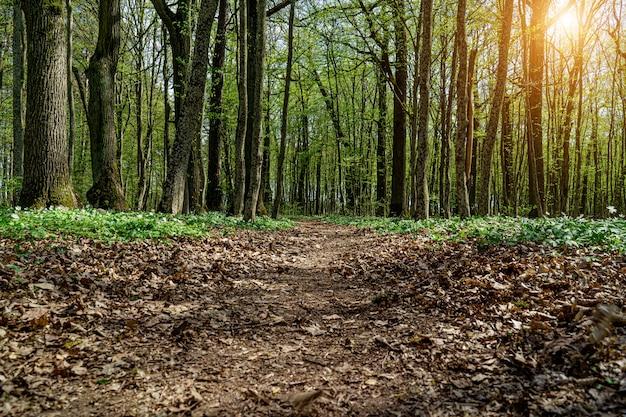 Estrada da floresta na primavera floresta