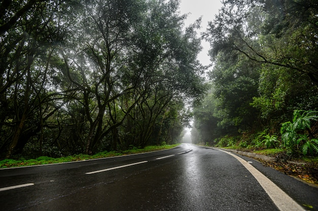 Estrada da floresta sinuosa no nevoeiro. montanhas da ilha de la gomera