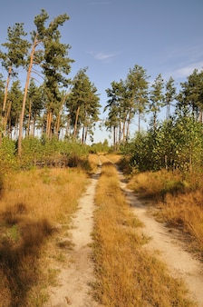 Estrada da floresta