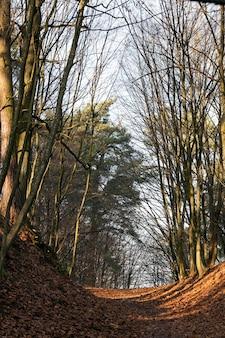 Estrada da vila através da floresta com o solo escavado coberto com folhagem de bordo laranja de outono, paisagem de outono em tempo ensolarado