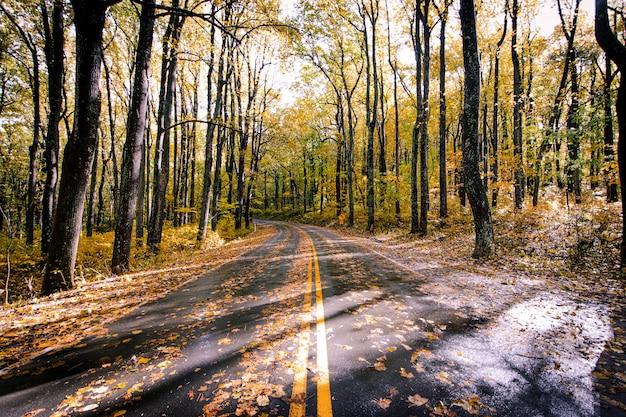 Estrada de asfalto coberta com folhas caídas em uma bela floresta de árvores
