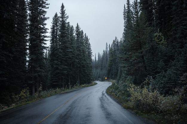 Estrada de asfalto curvada na floresta de pinheiros na sombria no parque nacional