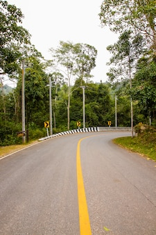 Estrada de asfalto curvada na floresta
