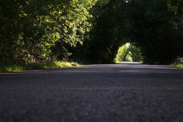 Estrada de asfalto entre a floresta