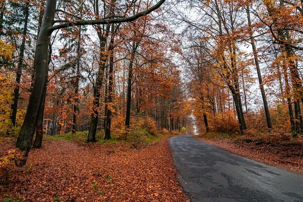 Estrada de asfalto florestal na floresta de outono.