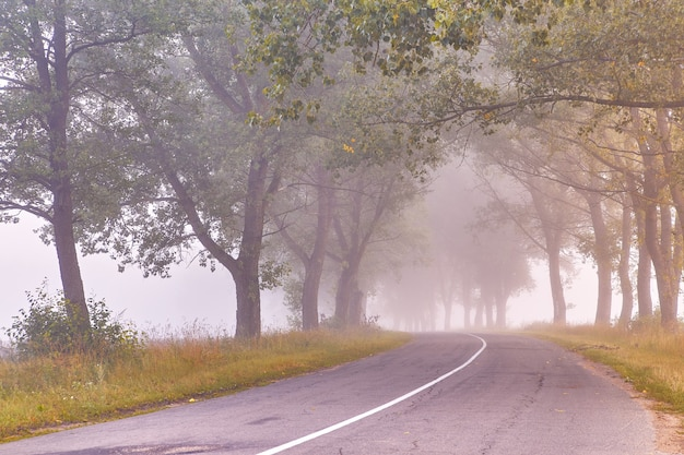 Estrada de asfalto rural manhã nevoenta de verão big trees valley driving magical poplar forest no outono