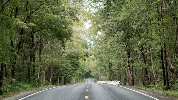 Estrada de asfalto vazia em direção à floresta verde.