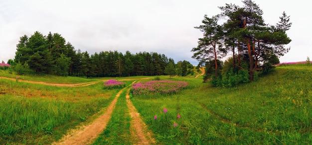 Estrada de campo. alturas de koltush - paisagem natural, distrito de vsevolozhsky, região de leninegrado. panorama.