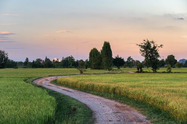Estrada de cascalho curva com arrozal no campo à noite